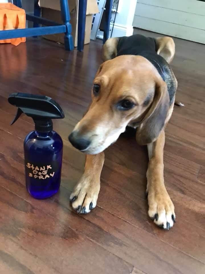 Easy DIY Essential Oil Dog Spray