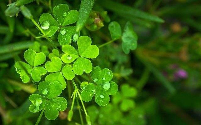 St. Patrick's Day ideas kids will love
